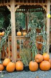 Halloween pumpkins Royalty Free Stock Photo