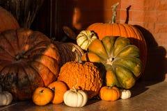 halloween pumpkins στοκ φωτογραφία