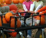 Halloween Pumpkins. Kids getting pumpkins at a farm Royalty Free Stock Image