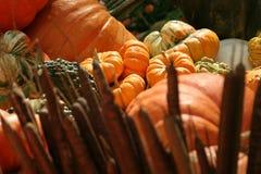 Halloween pumpkins. Pumpkins, Halloween and Thanksgiving decor Stock Image