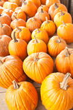 Halloween pumpkins Royalty Free Stock Images