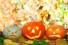 Halloween pumpkins. Lying outdoors on autumn leaves Royalty Free Stock Photos