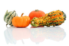 Halloween pumpkins. Halloween gourds with reflection isolated on white background stock images