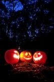 Halloween pumpkins. Spooky Halloween pumpkins in the woods royalty free stock photos