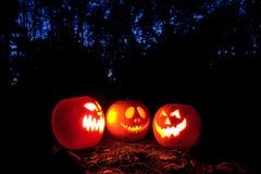 Halloween pumpkins. Spooky Halloween pumpkins in the woods royalty free stock photography
