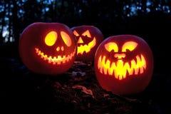 Halloween pumpkins. Spooky Halloween pumpkins in the woods royalty free stock photo