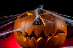 Halloween pumpkins, ambient light. Colorful, ambient halloween concept of scary pumpkins Royalty Free Stock Images