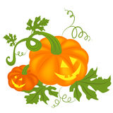 Halloween pumpkins background. Vector illustration of two Halloween pumpkins isolated on white Stock Photos