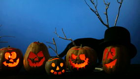 Halloween Pumpkins And Black Cat stock footage
