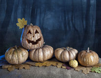 Halloween pumpkins in the forest Royalty Free Stock Images