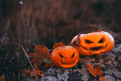 Halloween pumpkins in forest on stone Stock Photo