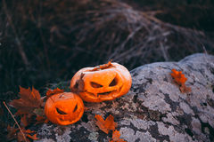 Halloween pumpkins in forest on stone Royalty Free Stock Image