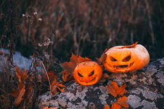 Halloween pumpkins in forest on stone Stock Image