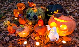 Halloween pumpkins in the garden, outdoor scene Stock Photos