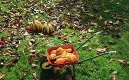 Halloween pumpkins inthe barrow Royalty Free Stock Image