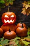 Halloween pumpkins on leaves Royalty Free Stock Photo