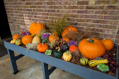 Halloween Pumpkins On Display Royalty Free Stock Photography