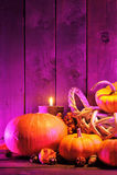 Halloween pumpkins in pink light Royalty Free Stock Photo