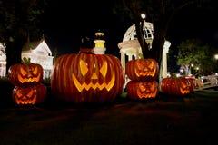 Halloween Pumpkins. Halloween pumpkin in the garden Royalty Free Stock Photo