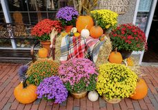 Halloween pumpkins and seasonal flowers at a shore in Salem, MA, USA. Royalty Free Stock Photography