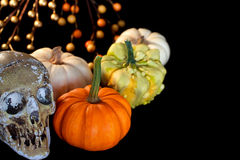 Halloween pumpkins with skull Stock Images