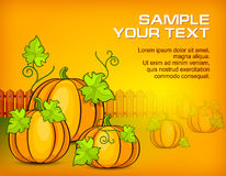 Halloween pumpkins & text Stock Image