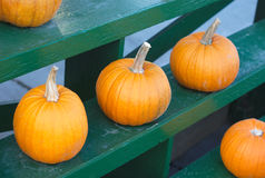 Halloween pumpkins for thanksgiving on green rack at the market Royalty Free Stock Images