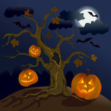 Halloween. Pumpkins under the tree Royalty Free Stock Photography