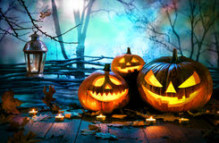 halloween pumpkins on wood in front of nightly spooky forest background stock image