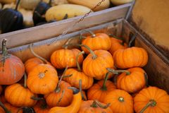 Composition with halloween pumpkins Royalty Free Stock Photography