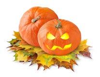 halloween pumpor Arkivfoto
