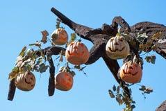 halloween pumpor Arkivbilder