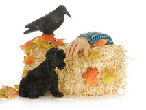 Halloween puppy Royalty Free Stock Photos