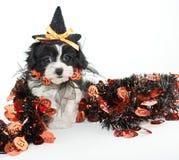 Halloween Puppy Stock Photos