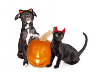 Halloween Puppy and Kitten With Jack-O-Lantern Stock Photos