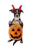 Halloween Puppy Trick-or-Treat Stock Photos