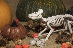 Halloween Rat Skeleton and Holiday Decorations. Halloween pumpkins in orange, green and gold, with a rat skeleton and skulls for the holiday decorations Stock Photos