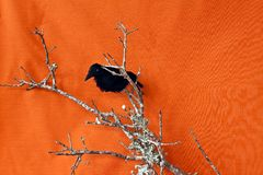 Halloween Raven on a dead branch Royalty Free Stock Photo