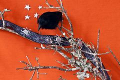 Halloween Raven on a dead branch with spiders Stock Images