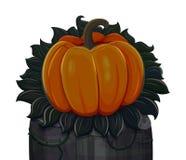 Halloween rzeźbiąca pączuszku pojedynczy białe tło Fotografia Stock