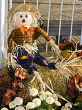 Halloween Scarecrow Stock Image