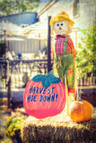 Halloween scarecrow with pumpkin and harvest hoe down sign Stock Photography