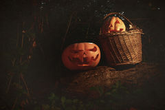 Halloween scary and funny pumpkins on a log in a basket in the d Royalty Free Stock Photo