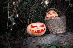 Halloween scary and funny pumpkins on a log in a basket in the d. Arkness with the glow from the inside royalty free stock photography