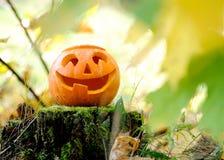Halloween scary pumpkin in autumn forest. Halloween scary pumpkin with a smile in autumn forest stock photo