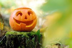 Halloween scary pumpkin in autumn forest. Halloween scary pumpkin with a smile in autumn forest stock image