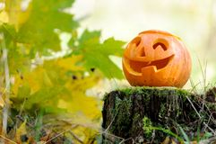 Halloween scary pumpkin in autumn forest. Halloween scary pumpkin with a smile in autumn forest royalty free stock photography