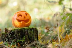 Halloween scary pumpkin in autumn forest. Halloween scary pumpkin with a smile in autumn forest stock photography