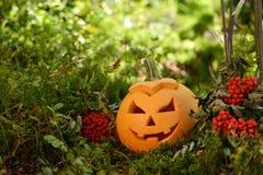 Halloween scary pumpkin in autumn forest Stock Photos