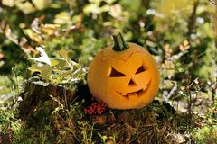 Halloween scary pumpkin in autumn forest Stock Photo